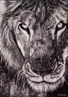 A Lion - Scratch Art By Blake Hannah