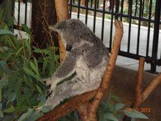 and Australia to see Work In Australia, Animals, Animales, Animaux, Animal, Animais