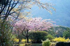 菰野町杉谷 散策 平成26年4月5日