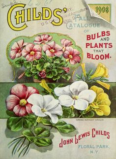 1908 - Childs' fall catalogue of bulbs and plants that bloom / - Biodiversity Heritage Library