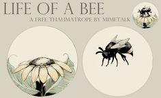 thaumatrope - Google Search | thaumatrope | Pinterest | Bees ...