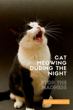 Cat Meowing During the Night – Why and How to Stop the Behavior – Cats and Meows – Pets' Loyalty Raising Kittens, Cats And Kittens, Kitty Cats, Cat Cat, Cat Meowing At Night, Cats Meowing, Crying At Night, Cat Crying, Cat Jokes