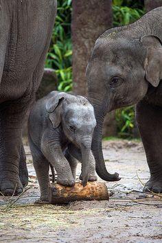 Elephant baby ... om gum ganapatayei namaha ... <3 www.24kzone.com