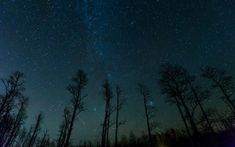 Preview wallpaper starry sky, trees, stars, night