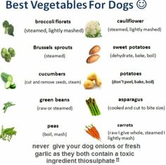 Vegetables are a rich source of vitamins,dog Vegetables antioxidants and fiber, and if you are a man, you probably dog diet veg. Dog Treat Recipes, Raw Food Recipes, Chien Goldendoodle, Cockapoo, Dog Vegetables, Foods Dogs Can Eat, Safe Foods For Dogs, Vegan Dog Food, Sprouting Sweet Potatoes