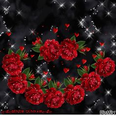 Discover & share this Animated GIF with everyone you know. Roses Gif, Flowers Gif, Love Flowers, You Are Beautiful, Beautiful Roses, Beautiful Images, Picmix Gif, Valentine Picture, Water Reflections
