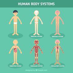 Sistemas corporales humanos Vector Gratis