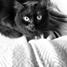 #cat #gato #pet #blackcat