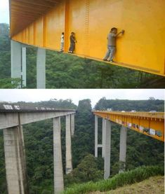 The Height of Stupidity