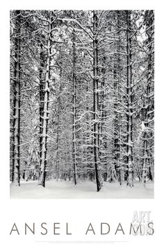 Pine Forest in Snow, Yosemite National Park, 1932, by Ansel Adams