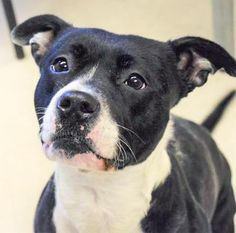 Our LWD Adoptable Dog of the Day today is Jeslayne, and she comes to us from our friends at the Humane Rescue Alliance in the Washington DC area. Read more