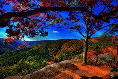 naturaleza y color