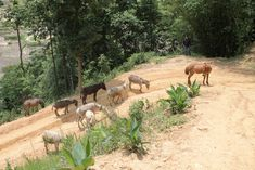 Rescued Brick Industry Donkeys Living the Good Life in Nepal Work With Animals, The Donkey, Tough Guy, Donkeys, Us Travel, Nepal, Animal Rescue, Wander, Life Is Good