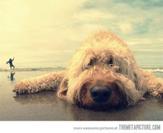 One day at the beach…