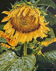 Glow by Helen Shideler in the FASO Daily Art Show