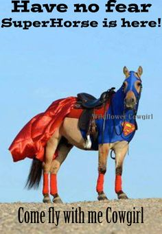 TaDa it's SuperHorse!!! Here to save you from boring rides. Great horse. Cowgirl life. Wildflower Cowgirl.