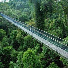 The Bukit Timah nature reserve has a wider variety of trees than all of North America. It's one of the places to visit in Singapore that's off the popular Singapore Garden, Singapore Malaysia, Singapore Travel, Singapore Sling, Malaysia Travel, Brunei, Marina Bay Sands, Sri Lanka, Laos