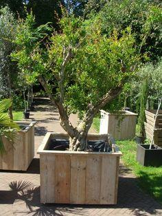 Steigerhouten plantenbak op wielen, afmetingen 100x100x70cm.
