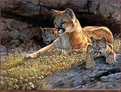 Young Mother Cougar and Her Two Cubs Enjoying a Sunny Afternoon.   (by Guy Coheleach).