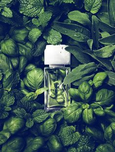 Mint & Basilic // Unknown perfume but the photoshoot is amazing. I can even feel the smell of grass and mint. It should be very soft and fresh. Still Life Photography, Beauty Photography, Fashion Photography, Product Photography, Cosmetic Photography, Poster Photography, Watches Photography, Édito Vogue, Photo Manipulation
