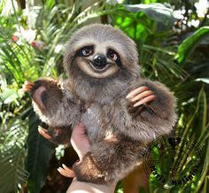 Sloth Lucky-looking for a house