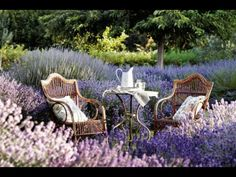 We love this lavender packed garden! What new plants are you planning to add to your garden in Check out this list of some of our butterfly garden favorites! Design Jardin, Garden Design, Terrasse Design, Butterfly Plants, Butterflies, Starting A Garden, Garden Cottage, Outdoor Furniture Sets, Outdoor Decor