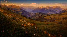 Скачать обои цветы, Швейцария, луга, домики, поля, склон, горы, обработка, деревья, озеро, рассвет, трава, леса, раздел пейзажи в разрешении 1920x1080
