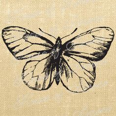 Butterfly/tattoo inspiration