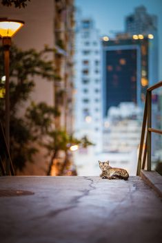Hong Kong evenings One Night In Bangkok, First Night, Hong Kong, Cats, World, Gatos, Kitty Cats, Cat, Kitty