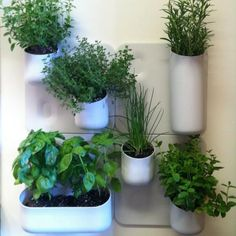 There are large, square plates that you hang on the wall. From there, you buy all the different sized pots that can go anywhere on the wall. Such an easy vertical garden.
