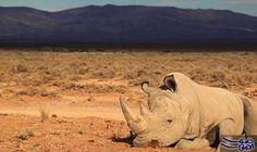 وحيد قرن يقتحم بيتًا ويقتل طفلة: ذكرت الشرطة المحلية في نيبال، أن حيواناً نادراً من نوع وحيد القرن، تسبب في مقتل طفلة تبلغ من العمر أربعة…