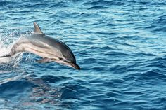 Observe bottle nose dolphins as you cruise around Anna Maria Island.