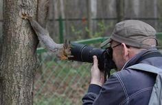 Los animales son maravillosos en todo sentido y los hay de todo tipo y tamaño, están los domésticos, los salvajes e incluso... a los que les gusta ser fotografiados. Si te divierte ver las caras de algunos de estos mientras hacen cosas totalmente fuera de lo común, aquí tienes algunas graciosas fotos de animales q