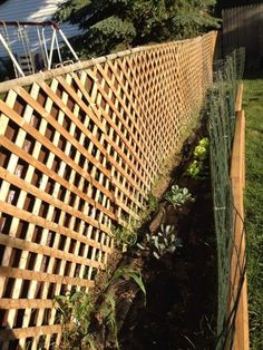 lattice yard ideas - Google Search