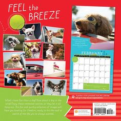 Dogs in the Wind 2016 Wall Calendar: 9781492626145 | | Calendars.com