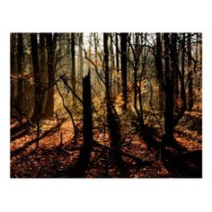 Sunrise in the winter forest trees and shadows postcard - photography gifts diy custom unique special