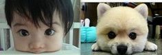 Cute Toddler and Puppy - Sanitaryum | CLEAN HUMOR | Clean Funny Pics, Vids & GIFS