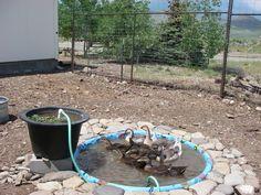 Biological filtered duck pond