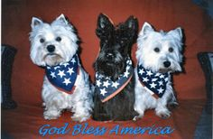 cute 4th of July pet clothes