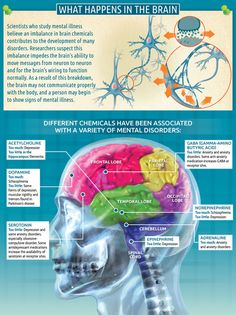 While this looks like the brain is controlled by the endocrine system, these chemicals are all made in the body, in organs run by the nervous system. It's all together.