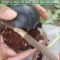 Air Layering, Grow Boxes, Plant Box, Outdoor Crafts, Living Off The Land, Plant Growth, Front Yard Landscaping, Green Plants, Horticulture