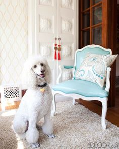 Mad Men costume designer Janie Bryant's poodle, Lucie, in Bryant's sunroom.