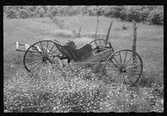 Old buggy in a field of daisies near Vian, Oklahoma, on abandoned farm 1939 Farm Pictures, Vintage Pictures, Modern Farmer, Country Life, Country Living, Daisy Field, Old Wagons, Old Glory, Day Work