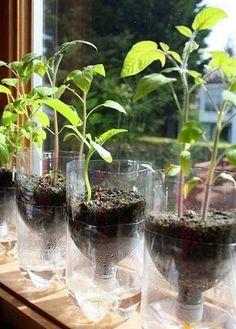 Como fazer um vaso de plantas de garrafa pet