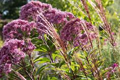 Discover some of the best plants to grow at the back of a border, including small trees, perennials and climbers – with help from BBC Gardeners' World Magazine. Patio Plants, Cool Plants, Garden Plants, Brook House, Wall Borders, Garden Fencing, Small Trees, Climbers, Perennials