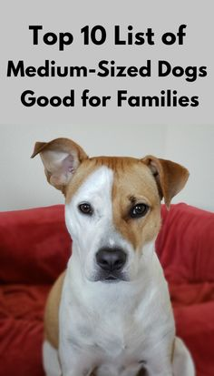 Top Ten List Of Medium Sized Dogs Good For Families Dog Breeds Medium Medium Sized Dogs Medium Sized Dogs Breeds