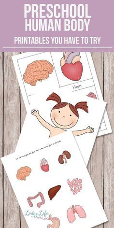 Preschool Human Body Printables Want to learn about the human body but don't know where to start? Get these preschool human body printables to teach your kids about their bodies. Learn about the different organs and where they belong. Body Preschool, Preschool Learning Activities, Preschool Printables, Preschool Lessons, Toddler Learning, Fun Learning, Preschool Activities, Teaching Kids, Activities For Children