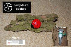 CUTE LADYBIRD GEOCACHE CONTAINER FOR GEOCACHING