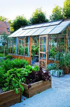 Working vegetable garden with greenhouse and wooden raised beds by Kay Berry