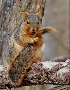 This is my tail. There are many like it, but this one is mine.  My tail is my best friend. It is my life. I must master it as I must master my life. My tail, without me, is useless. Without my tail, I am useless.............;)  Squirrel Creed